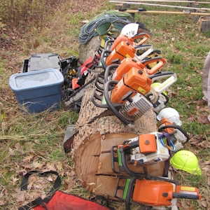 Tree service equipment on a tree trunk